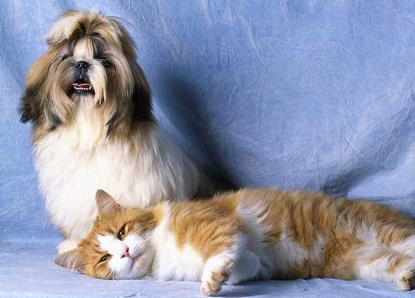 Top 10 Pet Disorders