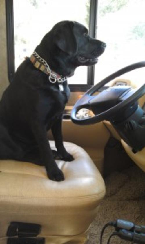 9 Essentials for Traveling with Your Retriever