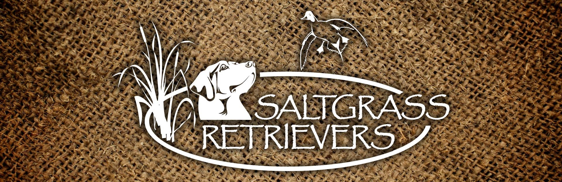 Contact Saltgrass Retrievers